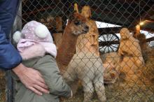 Niskowa: Owce, kozy i alpaki, a wśród nich Dzieciątko Jezus [ZDJĘCIA]