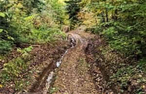 Ta ścieżka łączy Gródek i Korzenną. Dlaczego nie można położyć tu asfaltu?