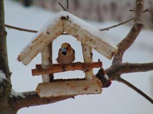 Trwa zimowe ptakoliczenie. Które ptaki są najczęstszymi gośćmi karmników?