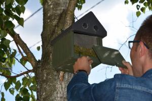 Chrońmy ptaki Nowego Sącza i okolic. Czy wiesz jak zrobić budkę lęgową?